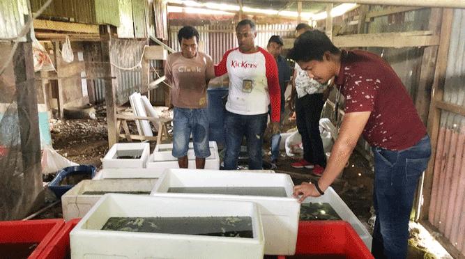 Penyelundupan 5.050 ekor kura-kura moncong babi dari Agats, Kabupaten Asmat ke Timika, Kabupaten Mimika berhasil di gagalkan anggota Subdit IV Tipidter Ditreskrimsus Polda Papua, Selasa (26/3/2019) pagi