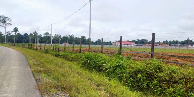 Lahan Peternakan Sapi di Kabupaten Teluk Bintuni,Papua Barat, Kamis (11/3/2021). (Foto : Istimewa)