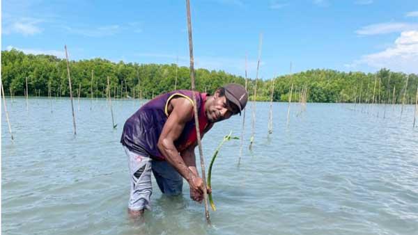 Salah satu warga di Kampung Armopa dengan mangrove yang ditanamnya.